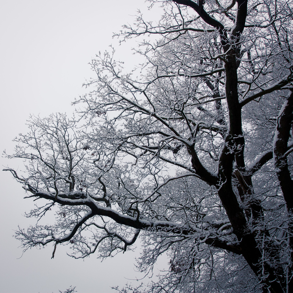 Hampstead Heath Snow 20120205-11.jpg