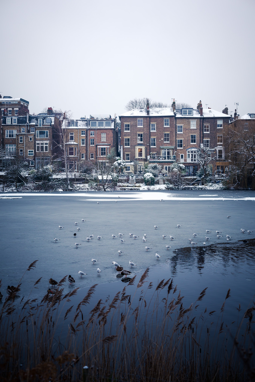 Hampstead_Snow_2013-1.jpg