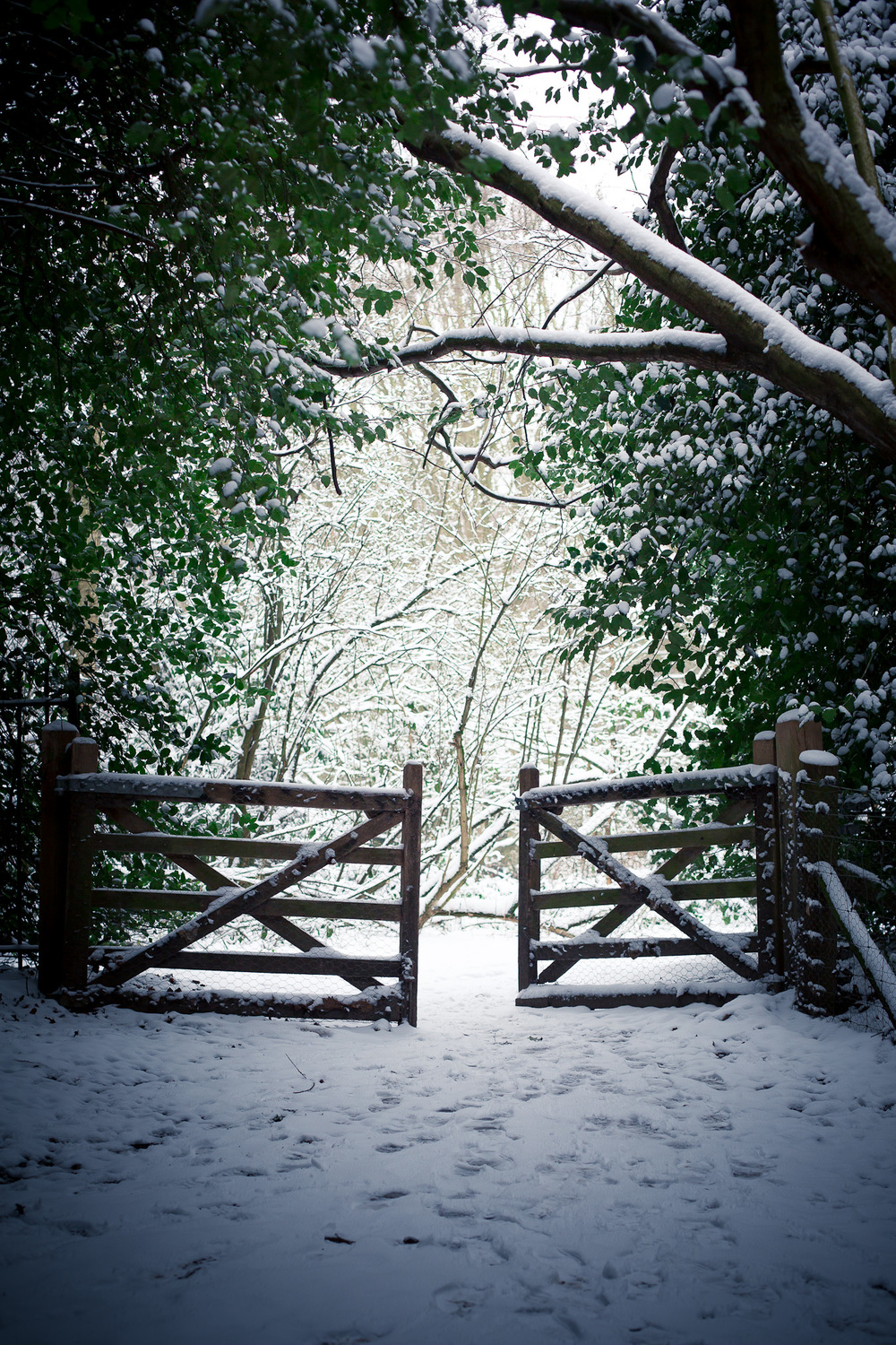 Hampstead_Snow_2013-3.jpg