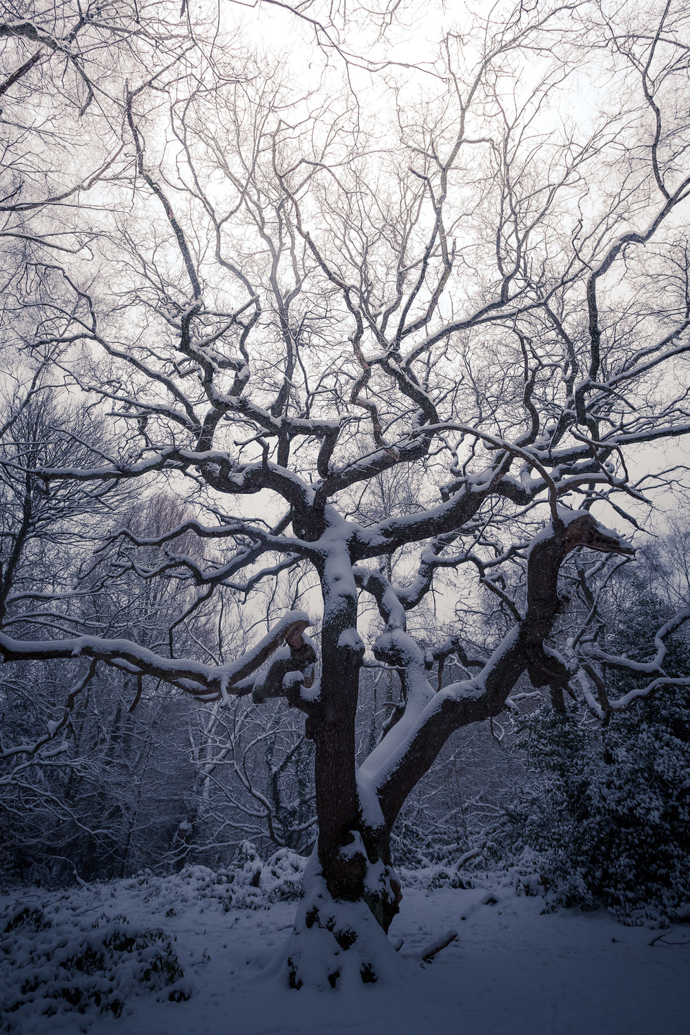 Hampstead_Snow_2013-8.jpg