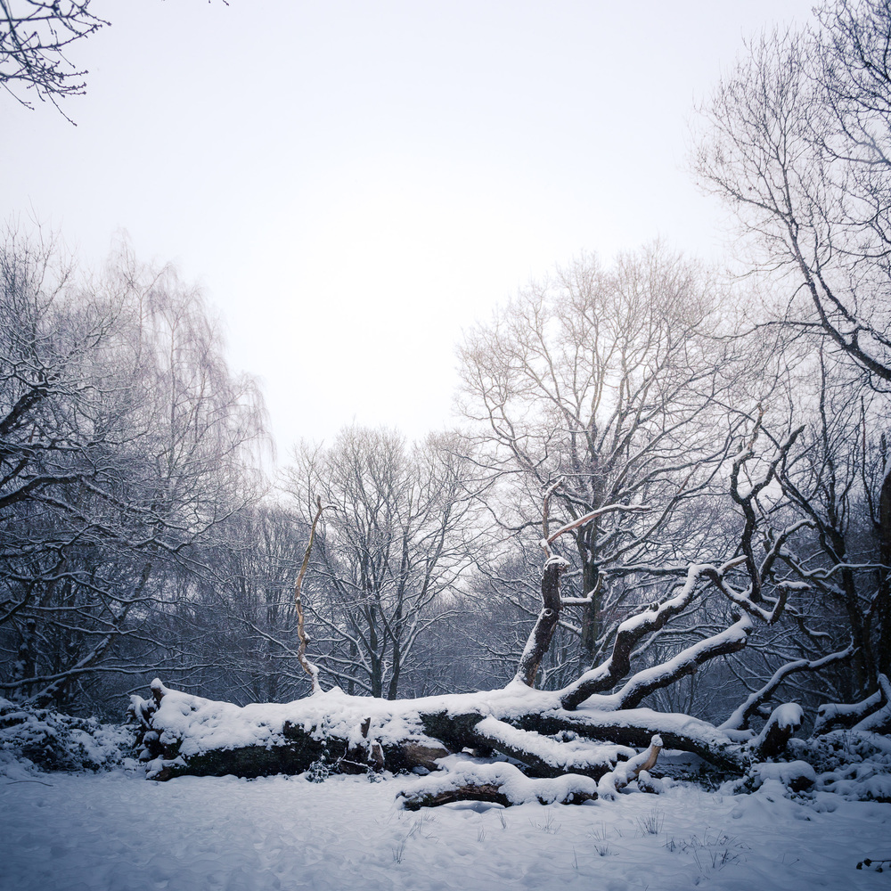Hampstead_Snow_2013-9.jpg
