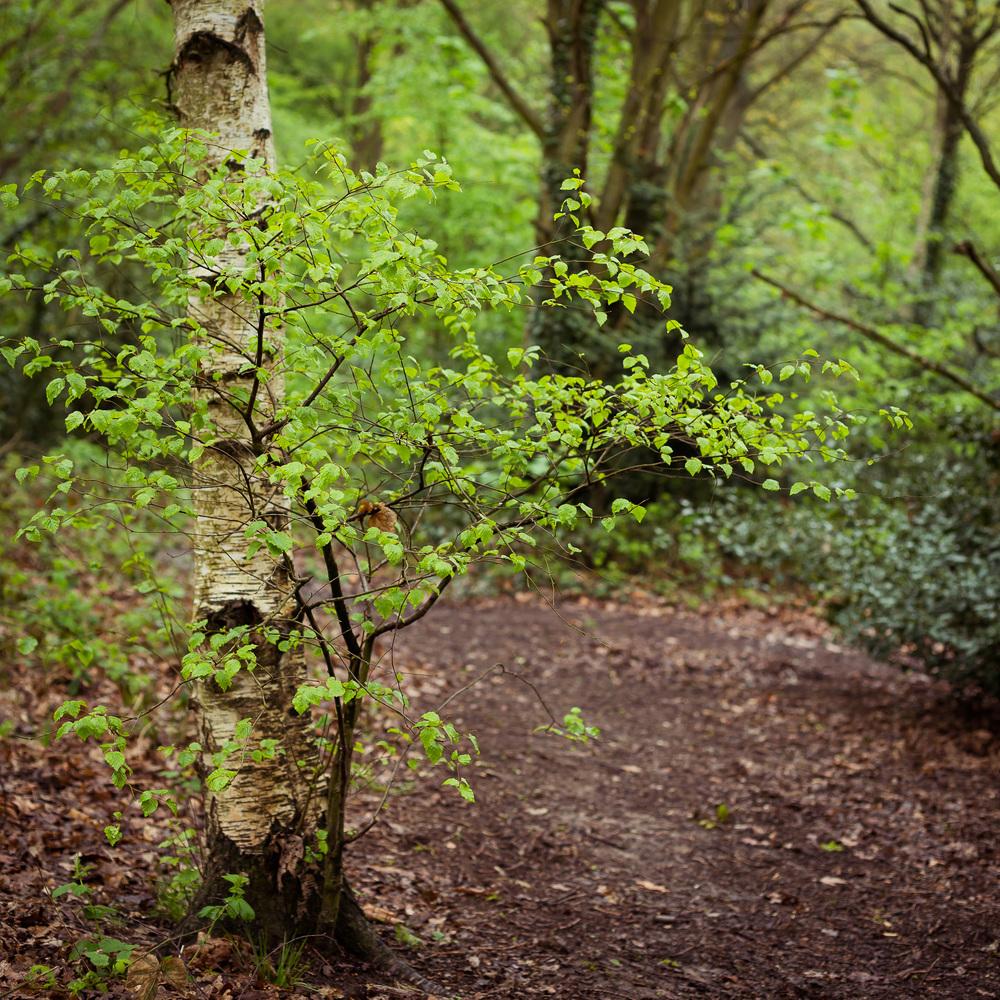 heath_spring_1.jpg