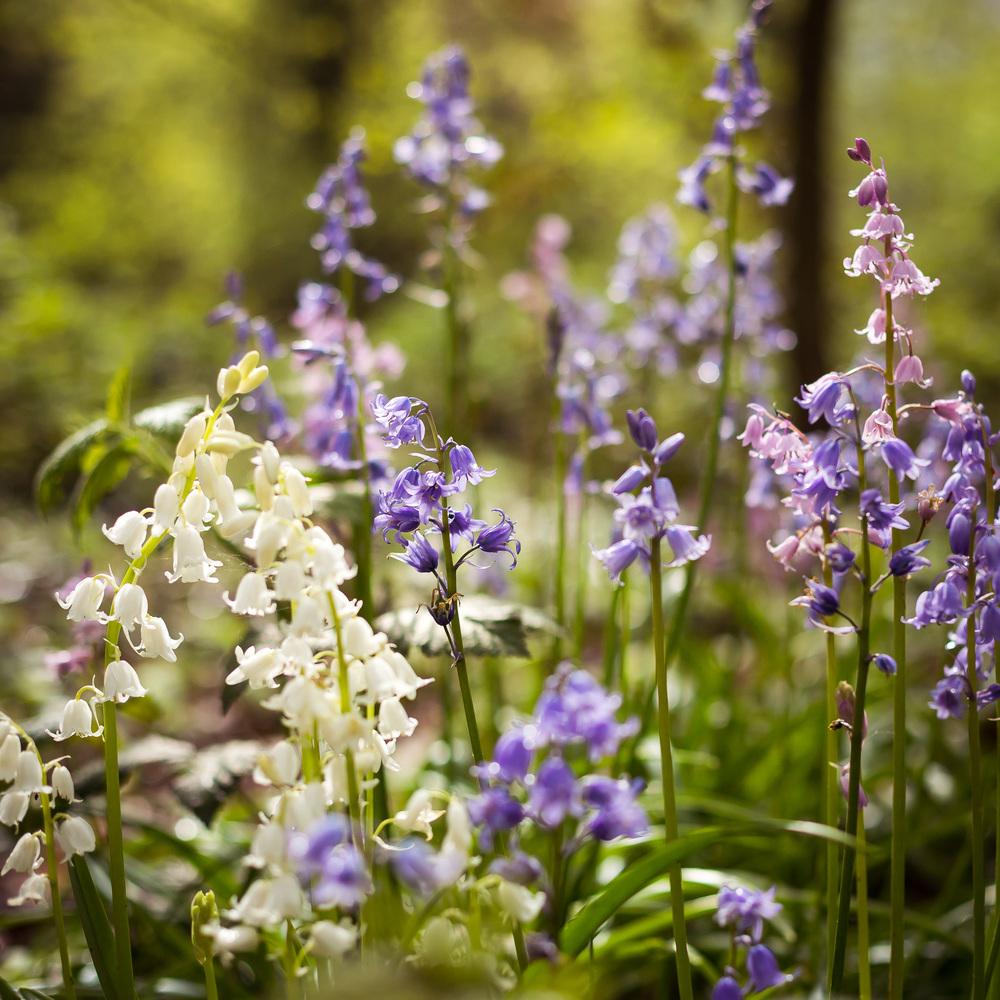heath_spring_4.jpg