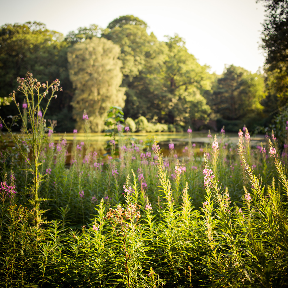 heath_summer-20120819-7.jpg