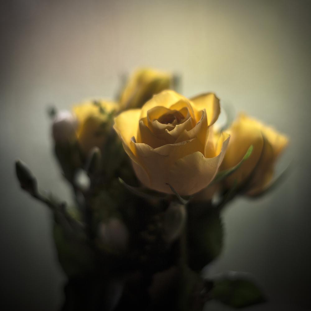 Flowers.jpg