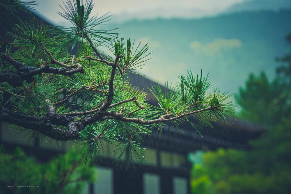 japan_nature_20160510_4.jpg