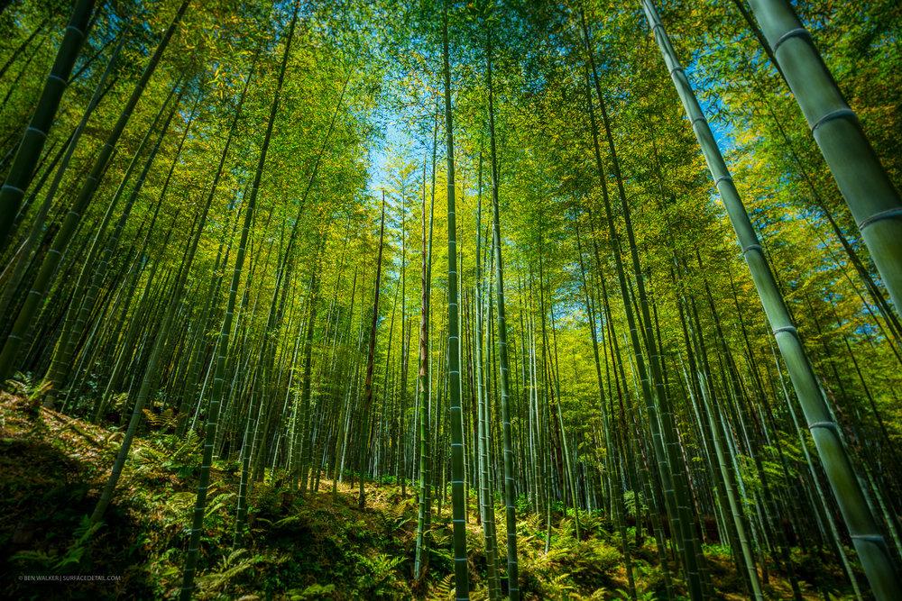 japan_nature_20160512_5.jpg