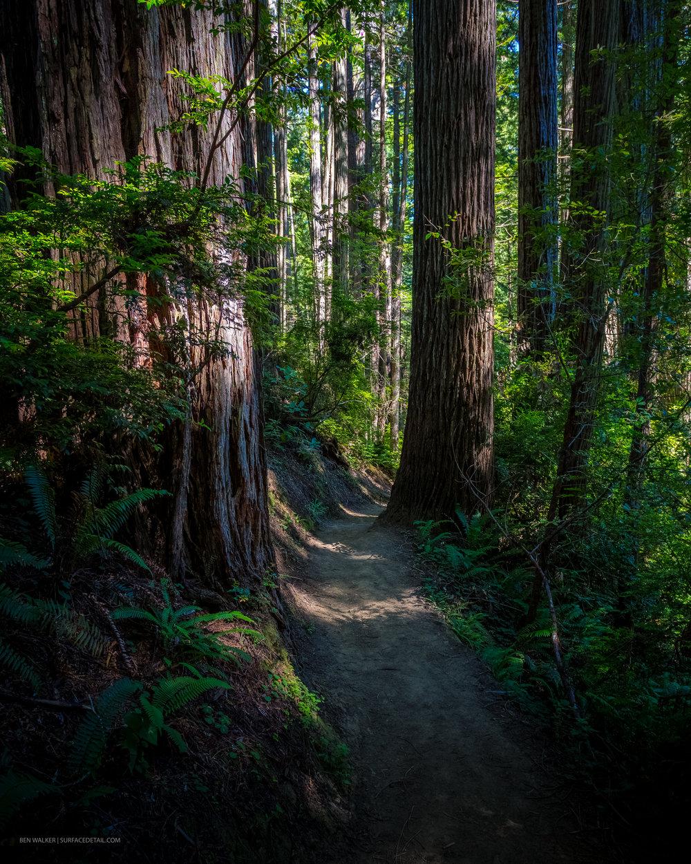 USA_Forest-4.jpg