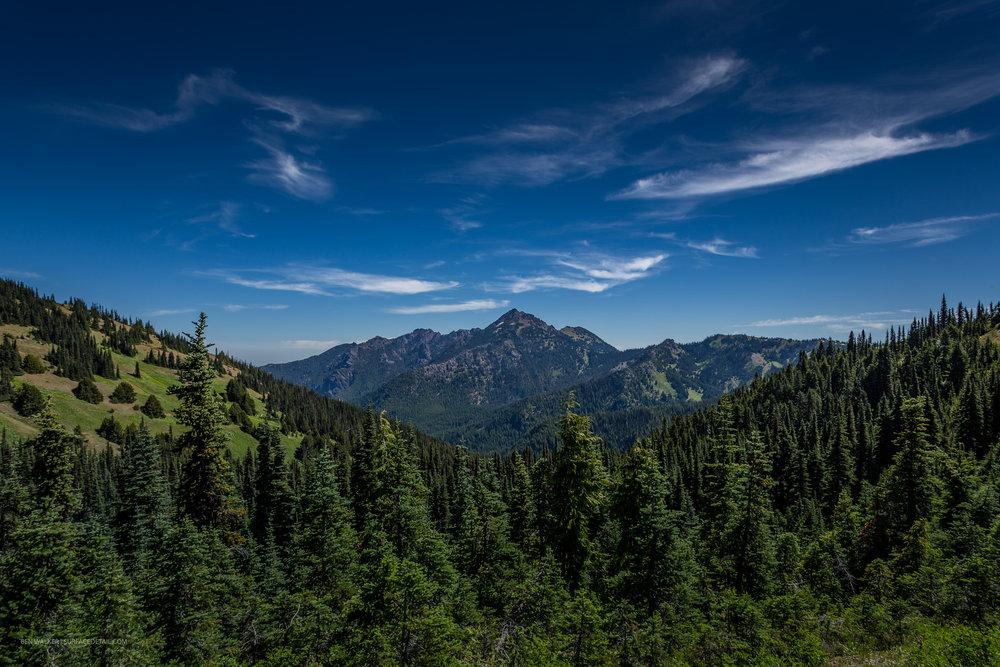 USA_Forest-9.jpg