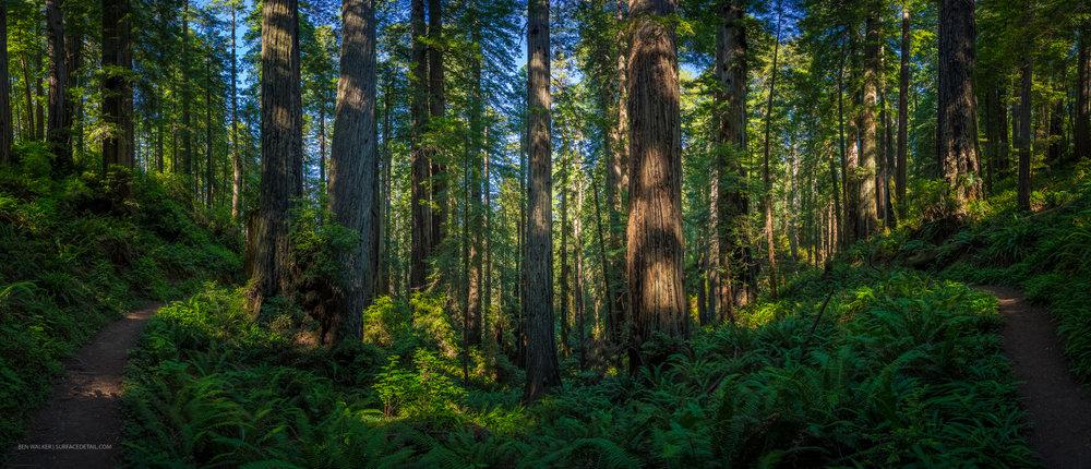 USA_Forest-8.jpg