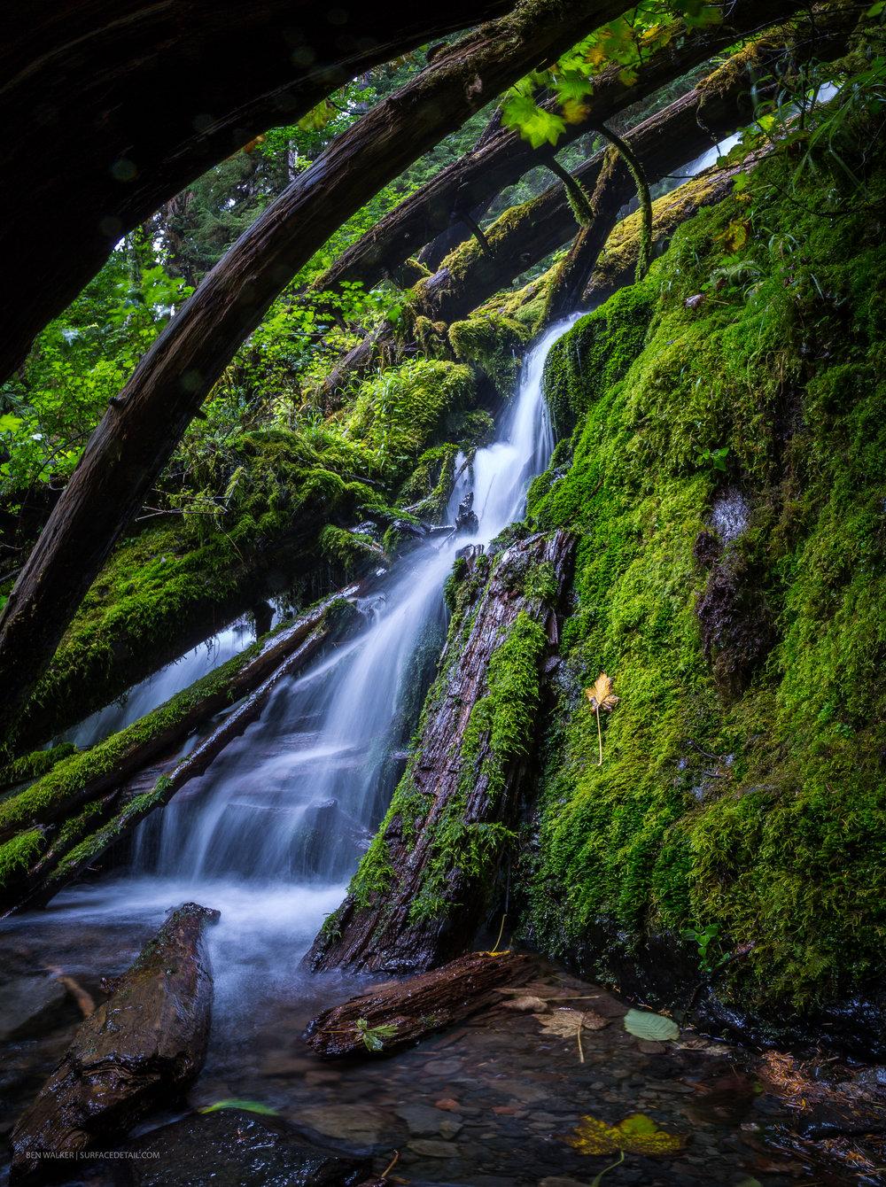 USA_Forest-5.jpg