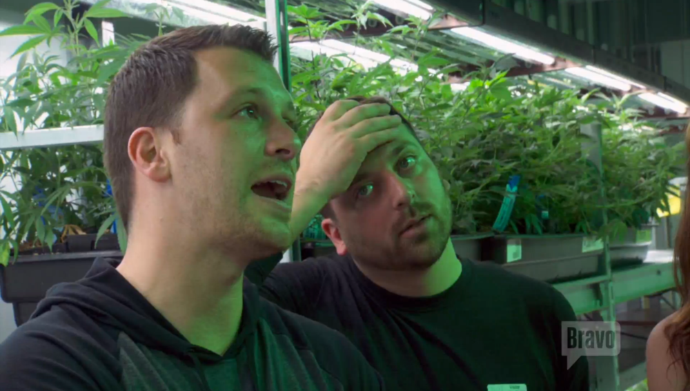 manzod-albie-chris-marijuana-farm
