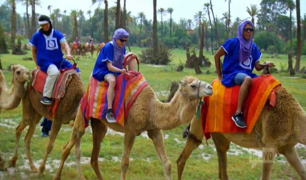 tour-group-steven-roberts-jay-ward-jared-levy-camels-morocco