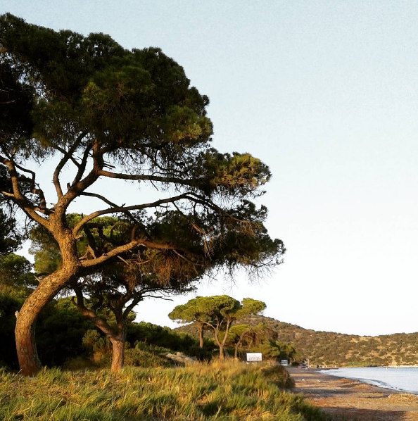 The pine forest reaches the sandy beach of Schinias in Athens' suburbs (Picture by chrismelodia/Instagram)