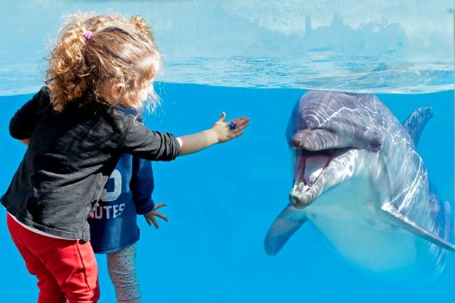 Don't miss the splashy dolphin show in Attica Zoological Park (Picture by Attica Zoological Park/Facebook)