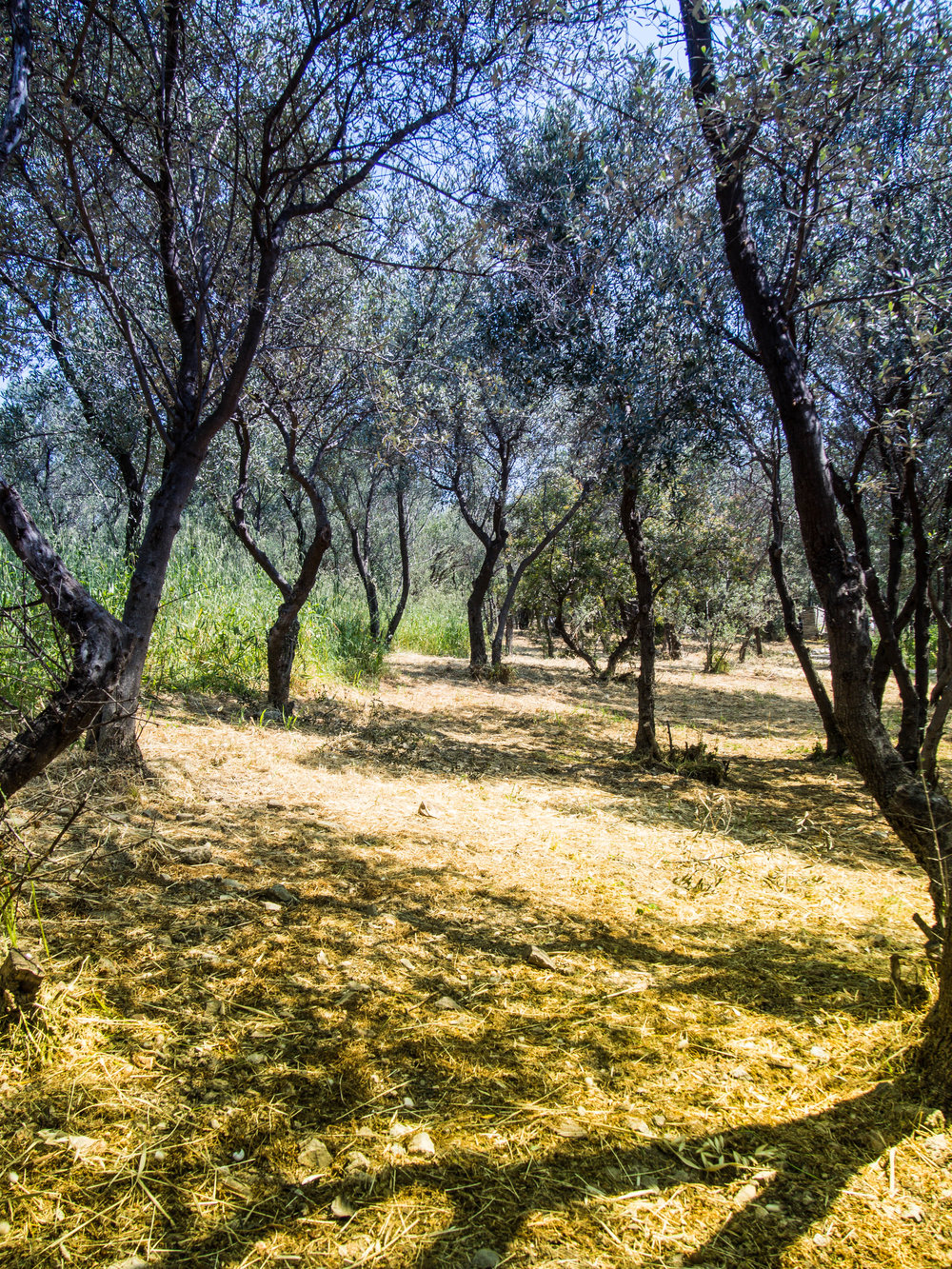 This magical grove is right next to the Acropolis (Photo  Randy Connolly /  Flickr)
