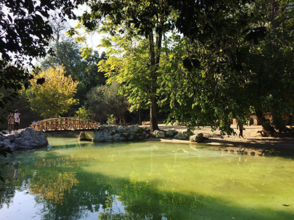 Yep, this urban oasis is in the centre of Athens! (Picture by  marishapro /  Instagram)