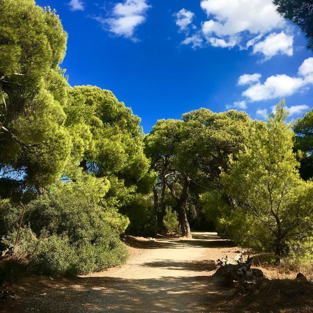 A green corner of the Alsos Syngrou in Marousi (Picture via Instagram/cdiddynyc)