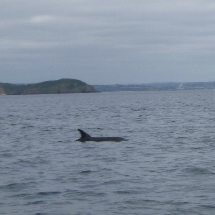 SUP Safari Dolphins Cornwall