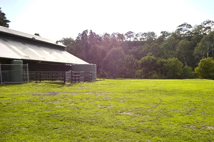 farm7.jpg