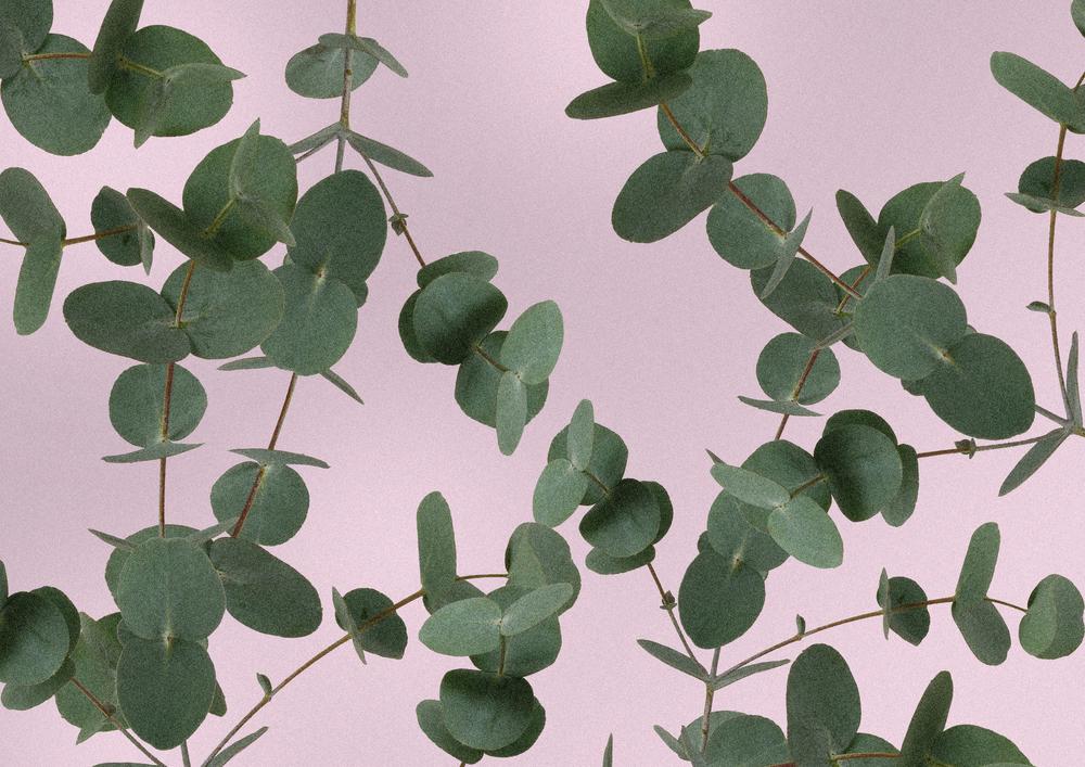 TSG-pattern-eucalyptus.jpg