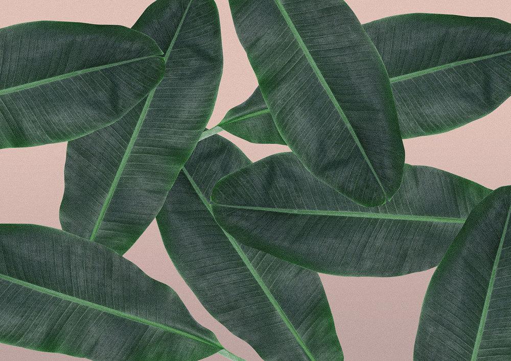 TSG-pattern-bananleaf.jpg