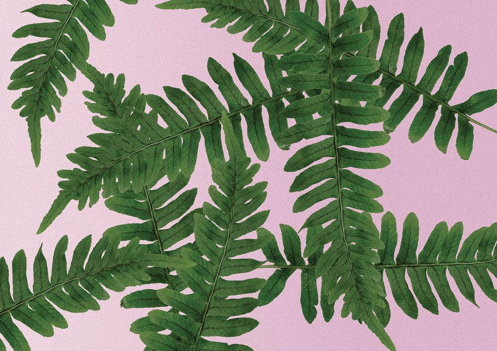 TSG-pattern-fern.jpg
