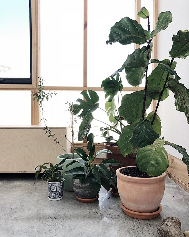 Hello new studio 😉👏🏻🌴 welcome to the new headquarters of Oh Babushka and @paradiso_magazine_ ... expect to see a lot of ply and indoor plants 😉👏🏻 #studio #design #thisisparadiso #plywood #plants