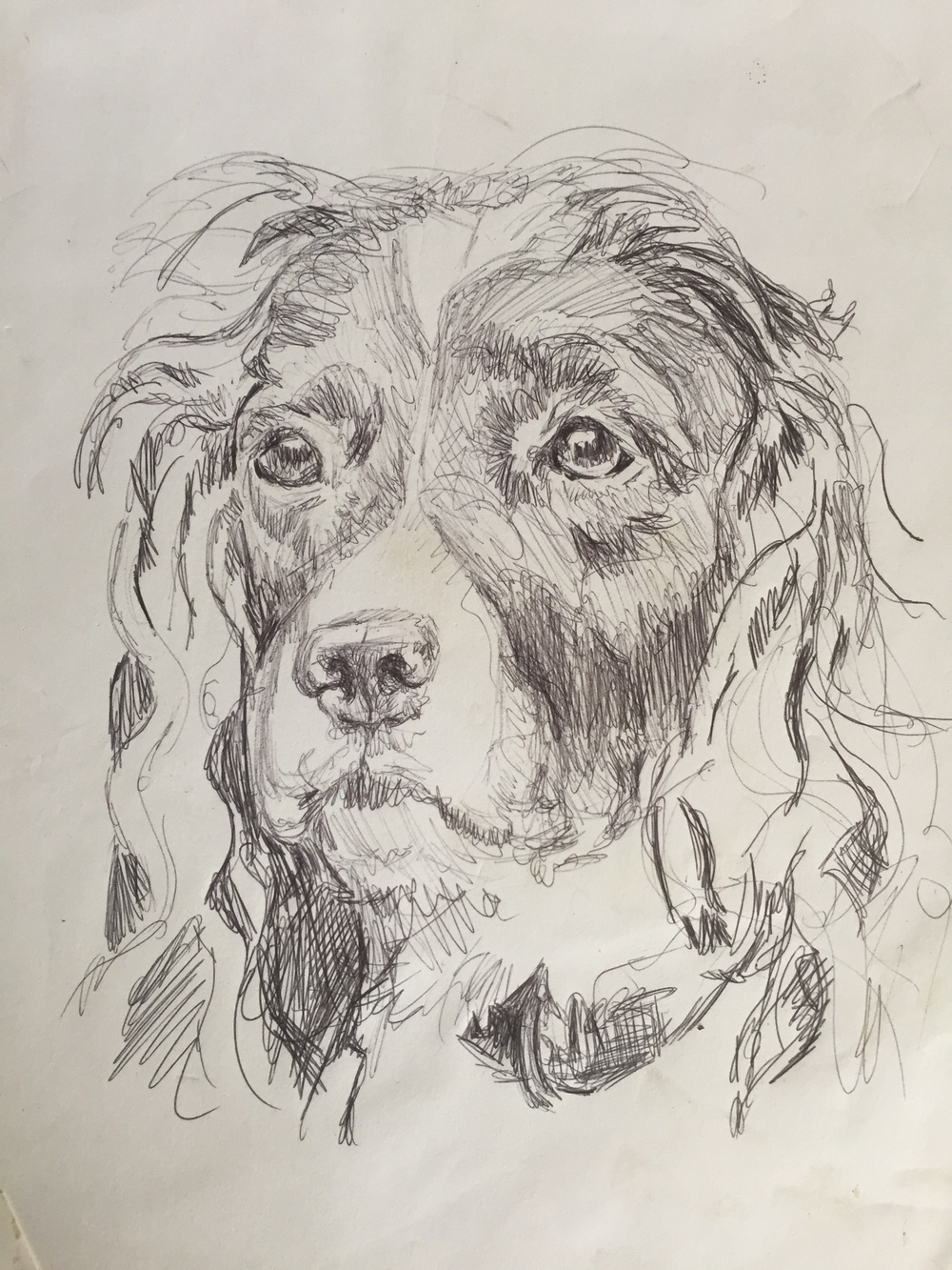 dog sketch.jpeg