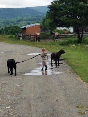 Farm dogs.jpg