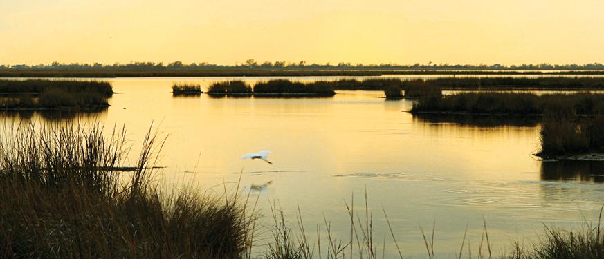 Coastal Restoration.jpg