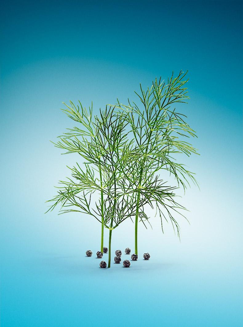 vegetable_2.jpg