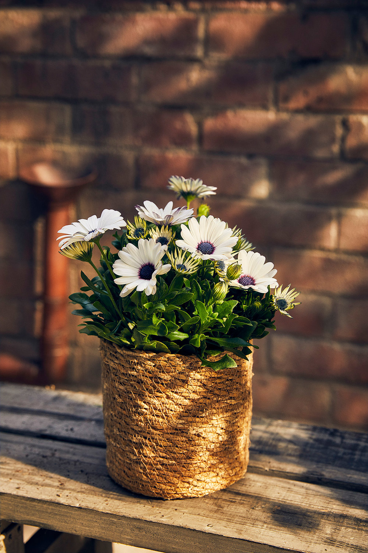 Blomsterlandet_Gerilla_10251_MINT.jpg