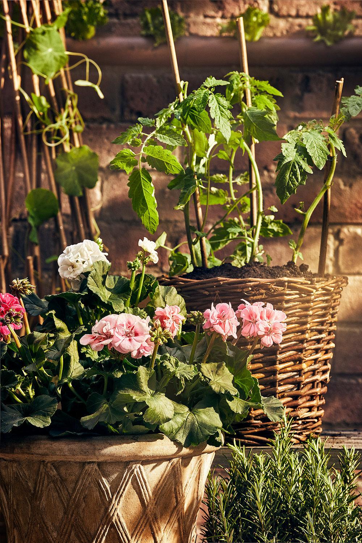 Blomsterlandet_Gerilla_AnnonsV_MINT.jpg