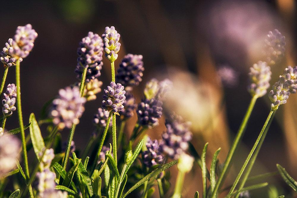 Blomsterlandet_Gerilla_NaraDetalj4b_MINT.jpg
