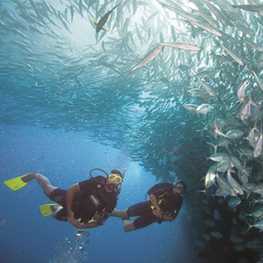 Divers who've mastered the highest performance levels in buoyancy stand apart. You've seen them underwater. They glide effortlessly, use less air and ascend, descend or hover, almost as if by thought.  During the 2 PADI Peak Performance Buoyancy dives, you refine the basic buoyancy skills you learned and elevates them to the next level. COURSE REQUIRES 2 DIVES, NOT INCLUDED IN THE PRICE.
