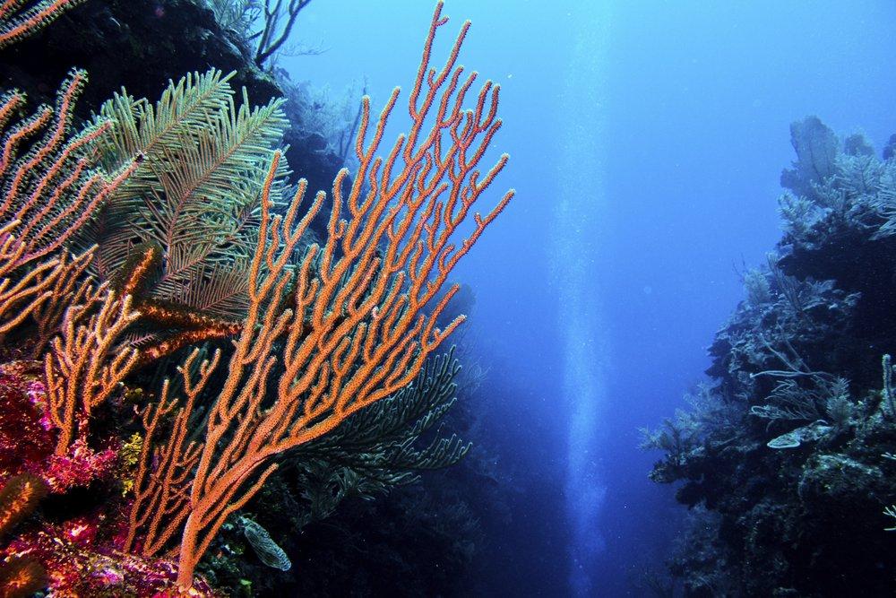 Dive Sites -