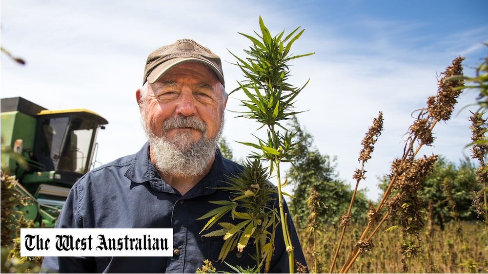 The State's hemp farmers are harvesting their biggest haul yet — and for the first time seeds will be commercially processed in WA instead of being sent east.  Hemp Processors WA — established by local businessmen Steve Thomas and Peter Munachen — is about to finish harvesting its 15ha crop at Margaret River, while almost another 480ha, mostly in the South West, will be harvested by about 30 other licensed growers this month.  At the same time, providing a major shot in the arm for the industry, Hemp Processors WA has imported the State's first large scale, commercial processing machinery that can sort and de-hull seeds, making them suitable for a wide range of food.