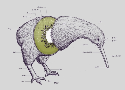 kiwi.. damn i love new zealand.