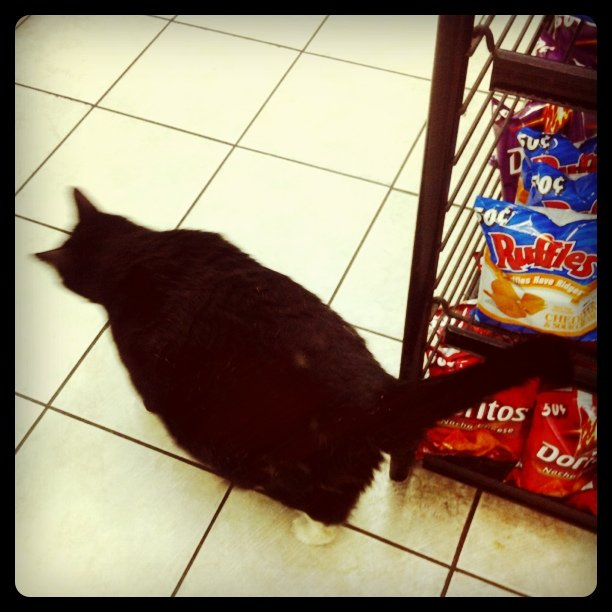 Fattest bodega cat evaaarrr (Taken with Instagram at Grand and greene bodega)