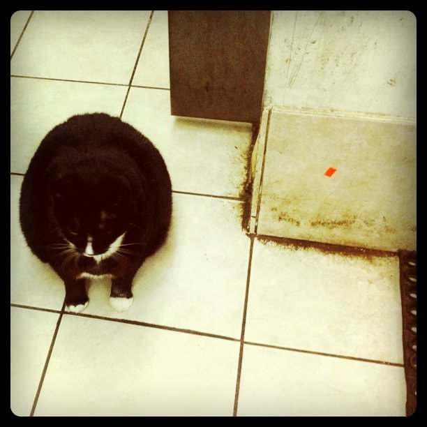 Fattest? Ionno.  (Taken with  Instagram  at Grand and greene bodega)