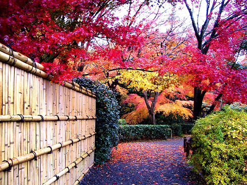 bamboukoura: Japan (via kari-shma)