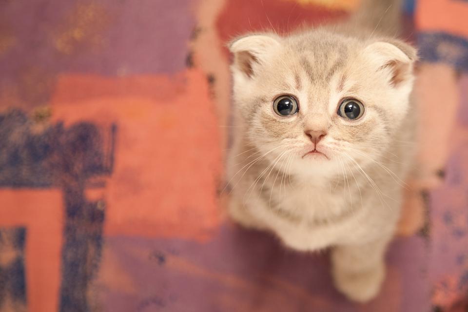 lil munchkeeen!!!! memeblr: Забери меня с собой! - Раздел животные - Фотографии на Фото.Сайте - Photosight.ru