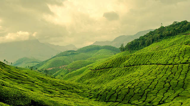 one day, india.  i'm coming.     theworldwelivein :     Ever green, never blue - Munnar, India, Asia ©  Ibrahim Areef
