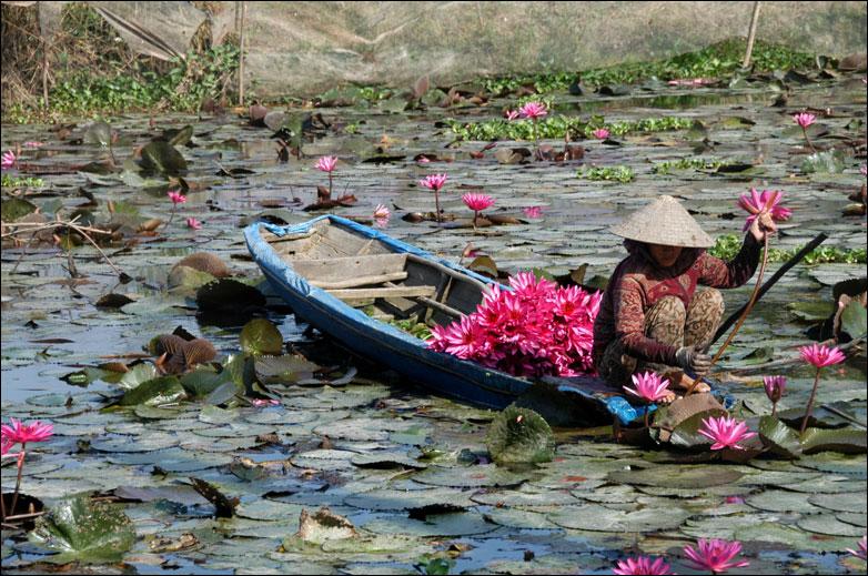 bamboukoura: Vietnam (via bwv789)