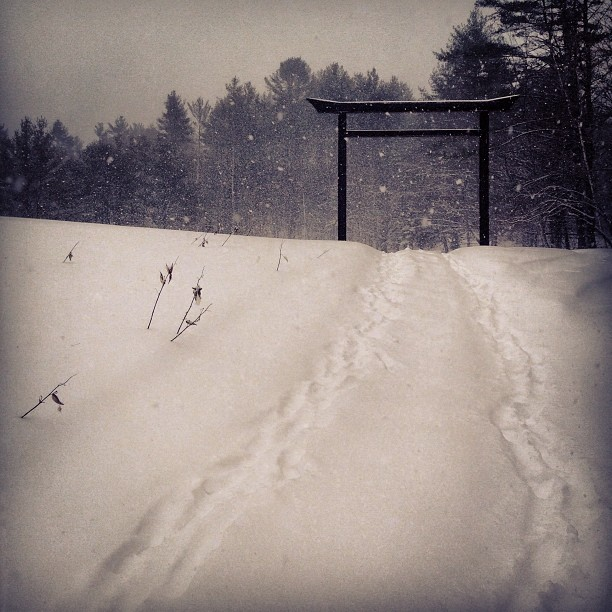 Silent warriors   Knee deep  Walk the path of many footprints   But travel alone    #shambhala #pawo
