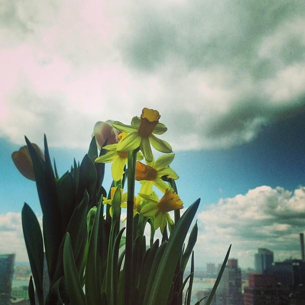 Happy #spring #nyc   We are so ready!!  #equinox #love #newbeginnings