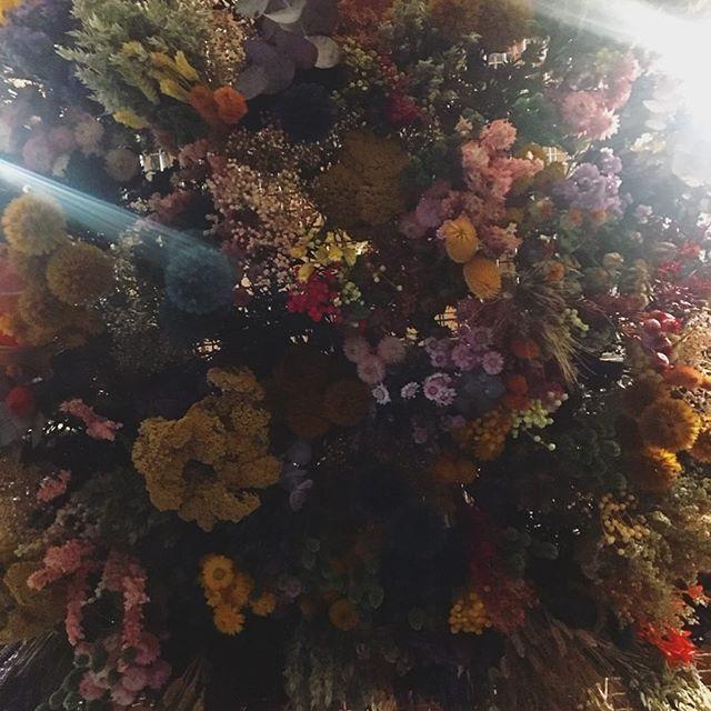 Dry flower shop