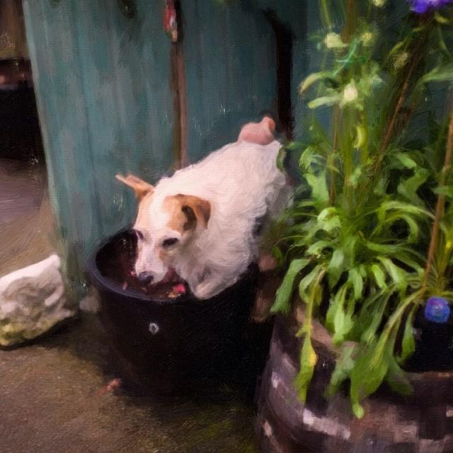 #dog #malcolmkingswell #painting #secret garden