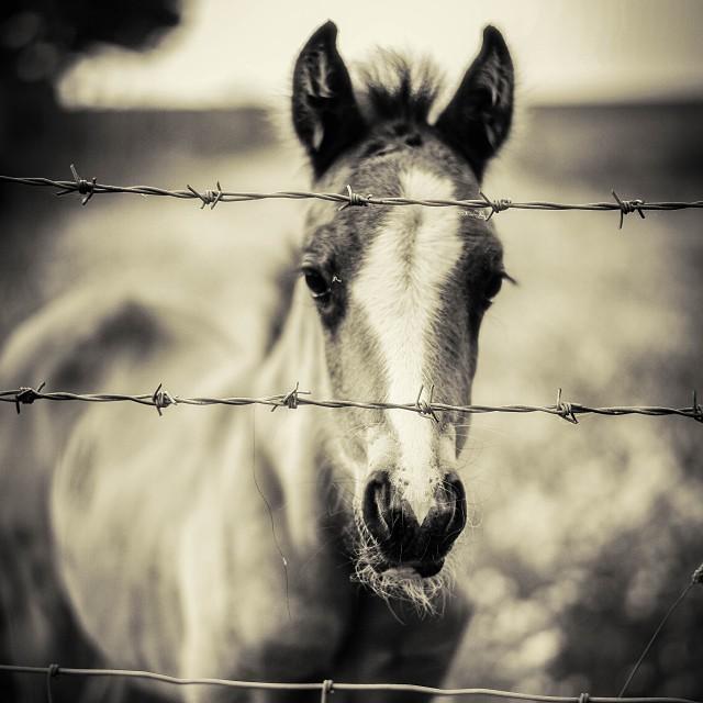 #wire #horse #monochrome #malcolmkingswell.com